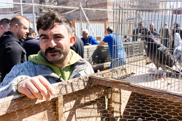Istanbul Pigeon Market