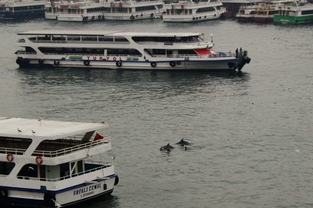 Haliç Golden Horn Metro Bridge Dolphins