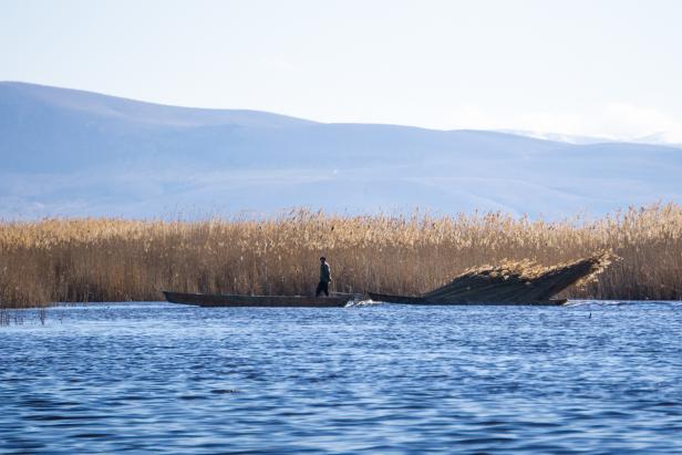 Eber Lake reed harvest