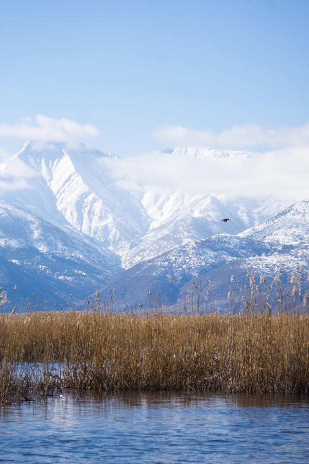 Eber Lake Bird