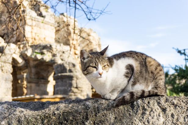 Side street Cat